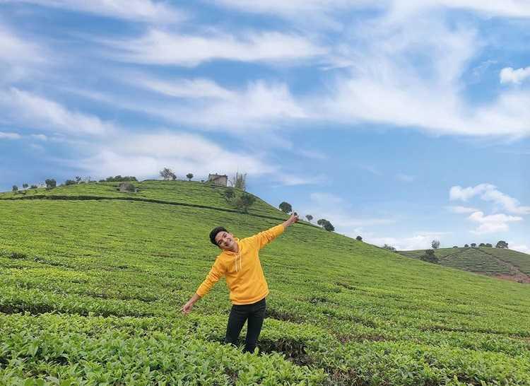 Đồi chè Tâm Châu, điểm du lịch check in nổi tiếng của Bảo Lộc