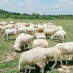 Đồi Cừu Suối Nghệ có phải là nơi sản sinh ra những tấm hình sống ảo cực chất