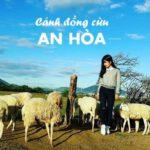 Đồng Cừu An Hòa là nơi bạn tìm hiểu cuộc sống trên thảo nguyên
