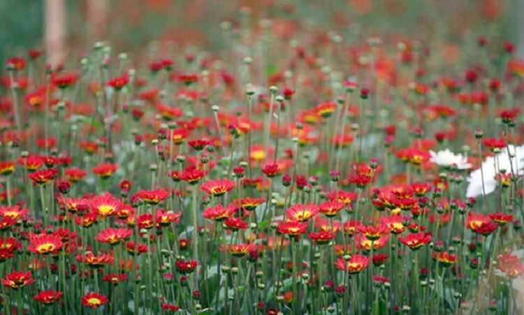 hoa nở rất đẹp