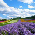 Làng hoa Vạn Thành là điểm chụp hình sống ảo với vô vàng màu sắc
