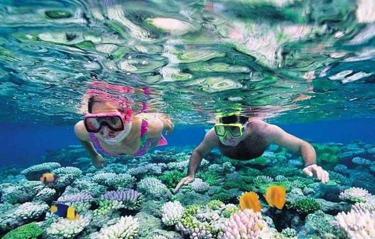 Lặng ngắm san hô