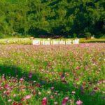 Thung lũng hoa Bắc Sơn là điểm chụp ảnh đẹp sống ảo của Lạng Sơn