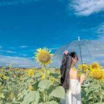 Vườn hoa Thanh Vân là nơi mà các bạn nữ tha hồ khoe sắc thi với hoa