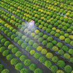 Làng hoa Sa Đéc thiên đường sống ảo chụp hình với muôn loài hoa