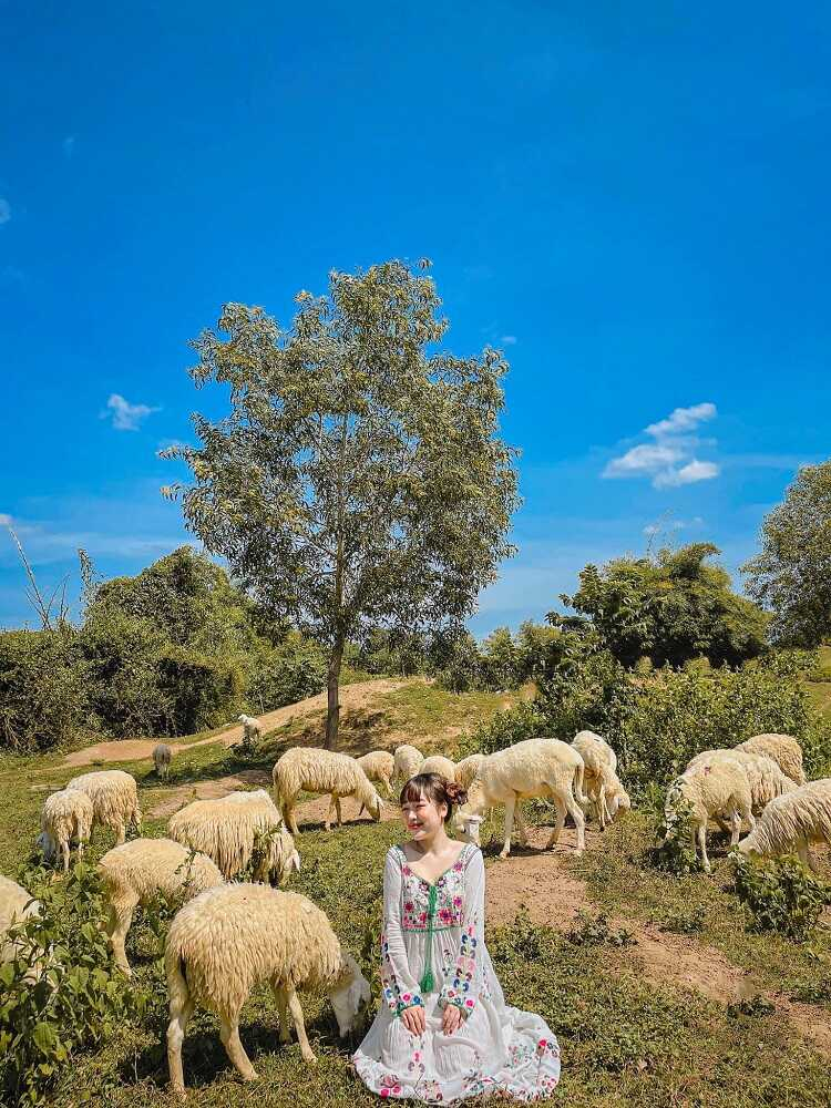 Đồi Cừu Suối Nghệ