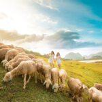 Đồng Cừu Ninh Bình là điểm chụp hình đẹp để check in sống ảo