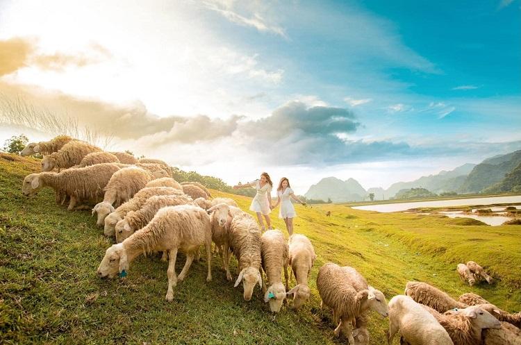 Đồng Cừu Gia Hưng Ninh Bình