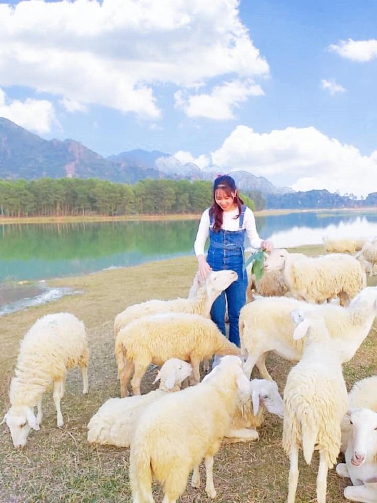 check in với cừu