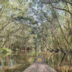 Khu du lịch Gáo Giồng là điểm khám phá đời sống trong rừng chàm chim