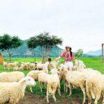 Đồng Cừu Suối Tiên là điểm chụp hình sống ảo theo phong cách châu âu