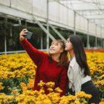Làng Hoa Mê Linh rộn ràng sắc hoa vào những ngày đón tết