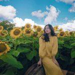 Cánh đồng hoa hướng dương điểm check in sống ảo siêu chất ở Bắc Giang