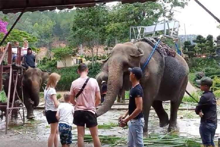 cưỡi voi